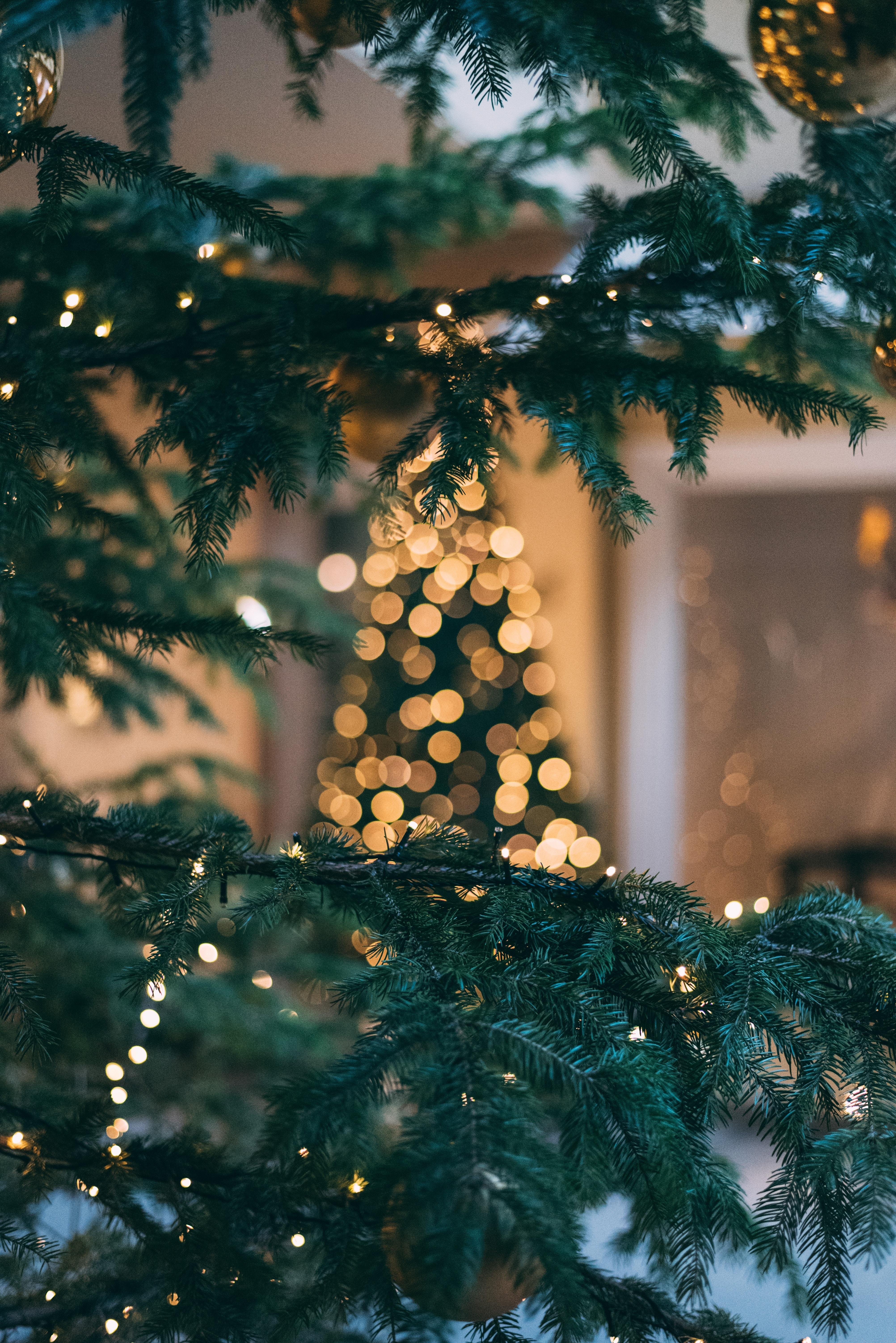 фото новогодних елок высокого качества девушка оказавшись даче